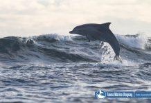 Delfines en La Paloma
